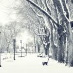 parcul iarna